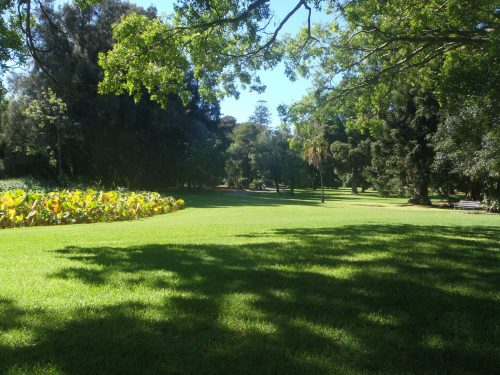 A cool, calming image of lush green grass, a park bench, trees, some blue sky and a person walking in the background.