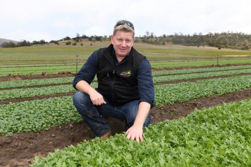 Lawrence Cowley, One Harvest General Manager, is kneeling down in a field of loose leaf lettuce.