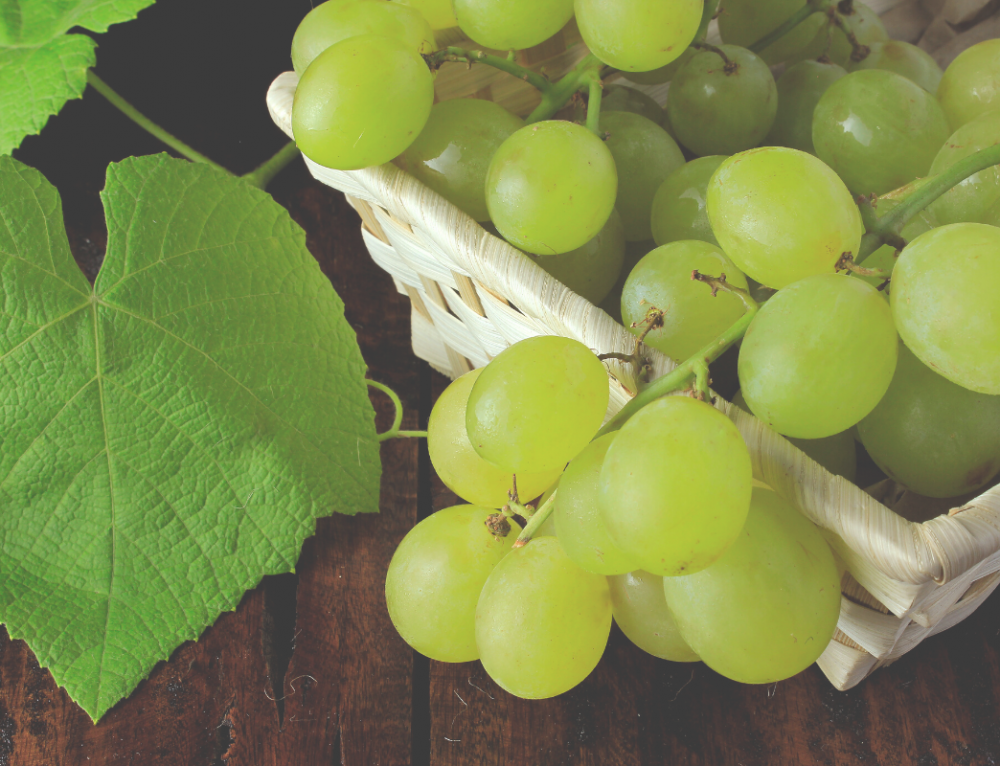 Tripling first-year table grape yields on a Western Australian Vineyard